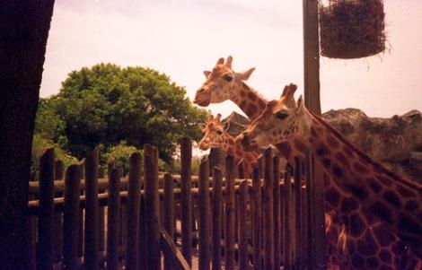 zoo tumblr
