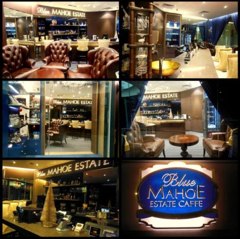 blue mahoe